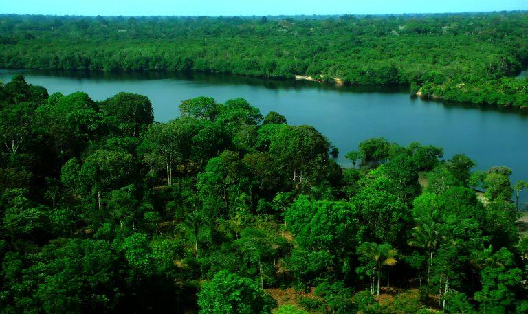 Um largo rio está cercado de florestas nos dois lados da margem