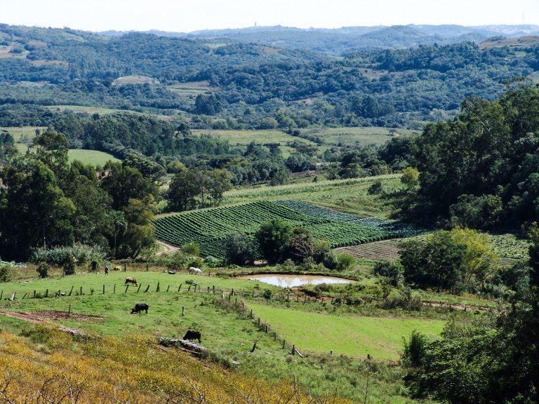 Agropecuária - geral - criação animais gado plantações zona rural fazendas (áreas rurais de Pelotas-RS)