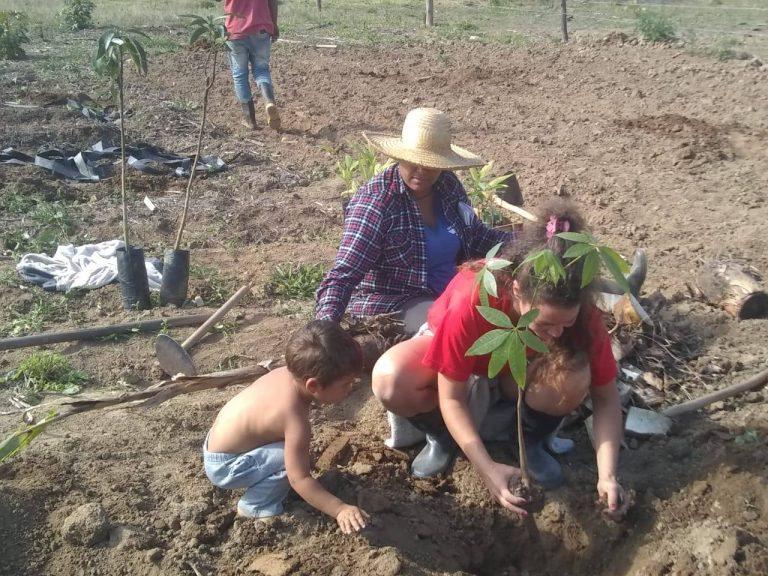 Agropecuária - plantações - agricultura familiar MST (Mutirão de Sistema de Agroflorestas no Pré-Assentamento Agroecológico Egidio Brunetto, em Lagoinha, no Vale do Paraíba (SP))