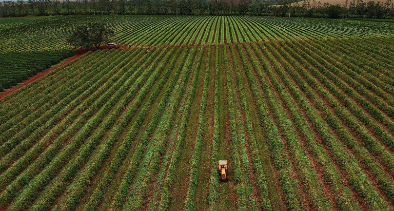 Vista aérea de campo de plantação de café. No meio da plantação há um trator