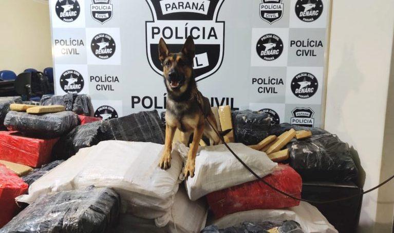 Cachorro sobre pilha de drogas apreendidas