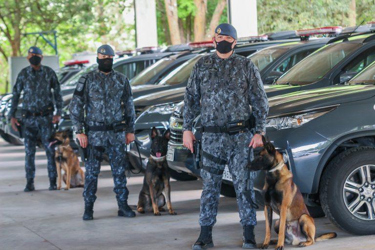 Segurança - geral - cães policiais adestramento pastor alemão (cachorros treinados pela Polícia Militar de São Paulo)