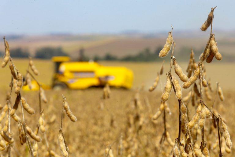Agropecuária - plantações - soja grãos agricultura fazendas rurais campo produção máquinas agrícolas exportações PIB comércio exterior (colheita da safra 2020 de soja no Paraná)