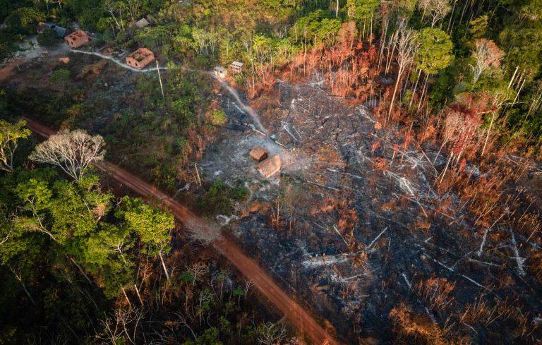 Vista aérea de uma parte da floresta queimada