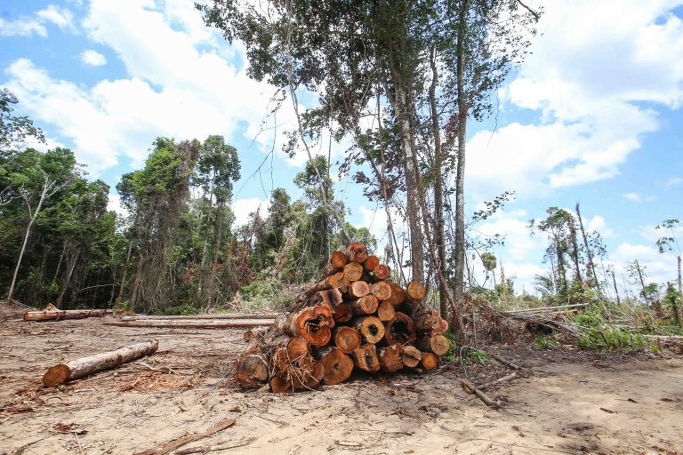 Meio Ambiente - queimada e desmatamento - crime ambiental - desmatamento ilegal - polícia ambiental - Operação Amazônia Viva 5 embarga propriedade em Moju após flagrante de desmatamento