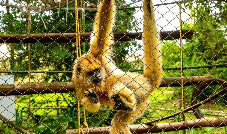 Mico em cerca de zoológico